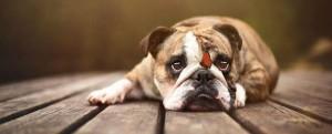 lili_kutyakozmetika